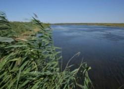 Белые амуры спасли цимлянское водохранилище от зарастания
