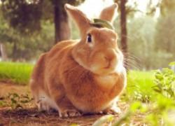 Крольчиха не хочет заботиться о потомстве