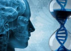 Какие гены ответят за старость