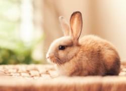 Как вылечить глазки кролику