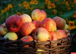 Самые вкусные яблоки – в саду у моей бабушки