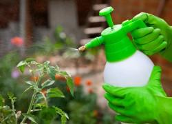 Спасите наши овощи