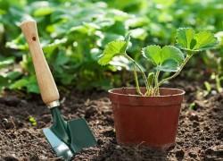 Ответственное дело – покупка растений для сада