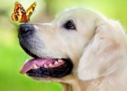 Трескается нос у собаки