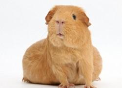 Беременность у животных и ее необычные формы
