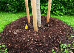 Можно ли задернять сад