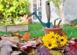 Работы в октябре в саду