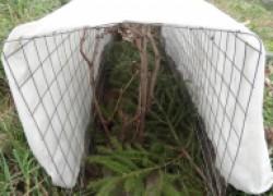 Стоит ли укрывать виноград на зиму