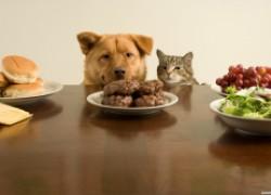 Что нельзя давать собакам и кошкам
