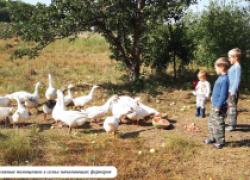 Как молодые и инициативные петербуржцы превратились в белгородских фермеров