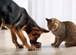 Почему собаке нельзя кошачий корм