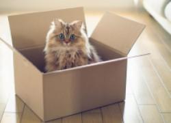 СЕМЬ причин, почему кошки любят коробки