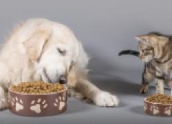 Чем отличается питание кошки от питания собаки