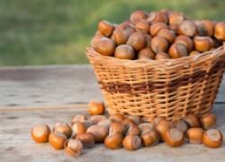 Как правильно заложить рощу фундука, чтобы собирать орехи ведрами