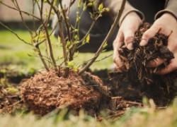 Правильно и своевременно окучивайте деревья