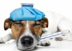 Как правильно ухаживать за больным животным