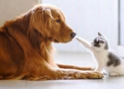 Еще один питомец: как подружить животных в доме