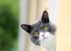 Почему кот смотрит в пустоту