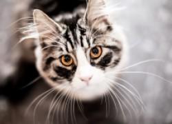 Зачем животным усы