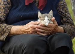 Кот локомотив и 25 подкидышей, или история о том, как женщина из Краснодарского края спасла животных от верной смерти