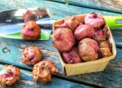 Сохраним семена, клубни, луковицы