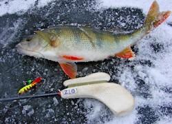 Топ 5 снастей для ловли окуня зимой