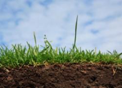 Накормите почву – и она накормит вас