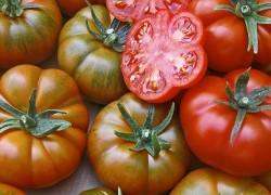 Почему семена помидоров покупают в январе