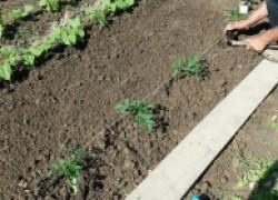 На каком расстоянии сажать растения