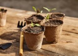 Черная ножка: готовимся защищать рассаду по полной программе