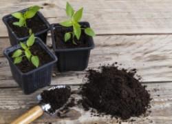 Как я готовлю почву для рассады
