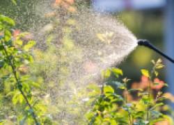 Препараты, убивающие заразу в саду