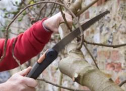 Лучшее время для обрезки садовых деревьев