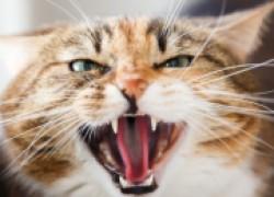 Моему коту нужна помощь