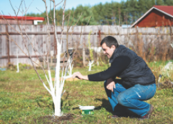 Первые садовые работы
