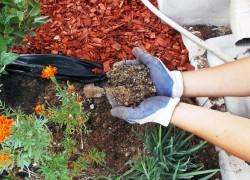 Мульча – живая подушка для растений