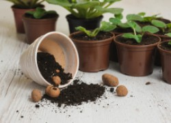 Зачем нужен дренаж для комнатных растений