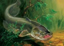 Счастливчик, или первая рыбалка на сома