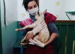Кормление козлят в первые три месяца жизни