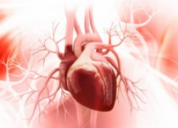 Тромбы внутри сердца