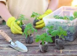 Как защитить рассаду от иссушения и агрессивного ультрафиолета
