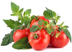 Зачем удалять листья на помидорах