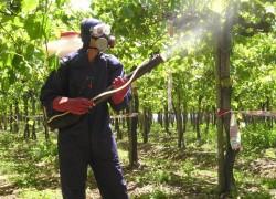 Чем опрыскать виноград весной