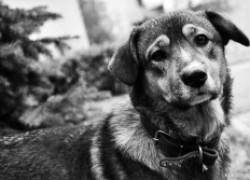 История собаки, спасшей в блокаду 16 человек