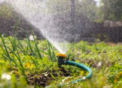 Три важных совета по поливу сада