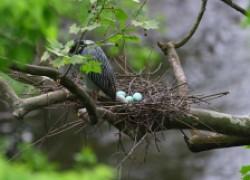 Не забирайте яйца из гнезд диких птиц