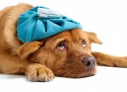 Десять симптомов, при которых надо показать собаку ветеринару