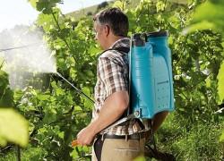 Лечебный душ для винограда
