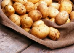 Чем помочь картошке