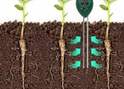 Что поможет сохранить влагу в почве
